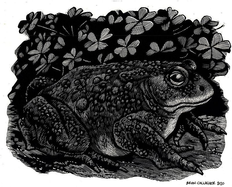 Brian Gallagher - Toad